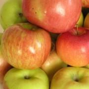 Шарлотка из яблок