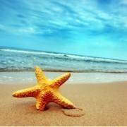 Чем занять себя летом