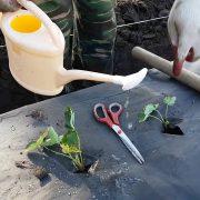 Как защитить цветочную клумбу от сорняков?